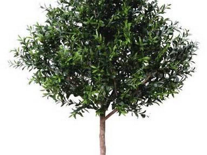 Artificial Indoor Trees
