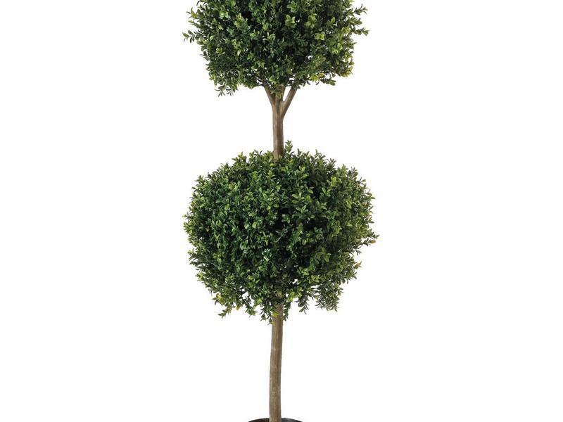 Boxwood Topiary Trees