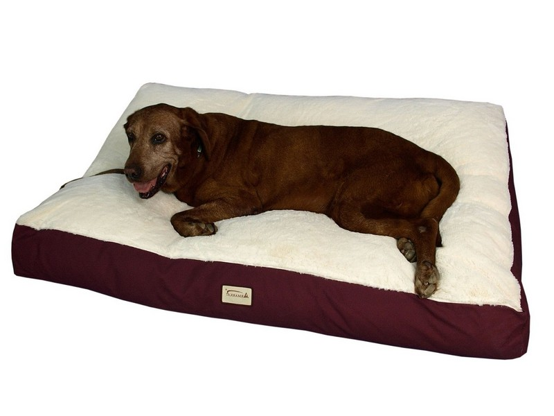 Extra Large Dog Beds Cheap