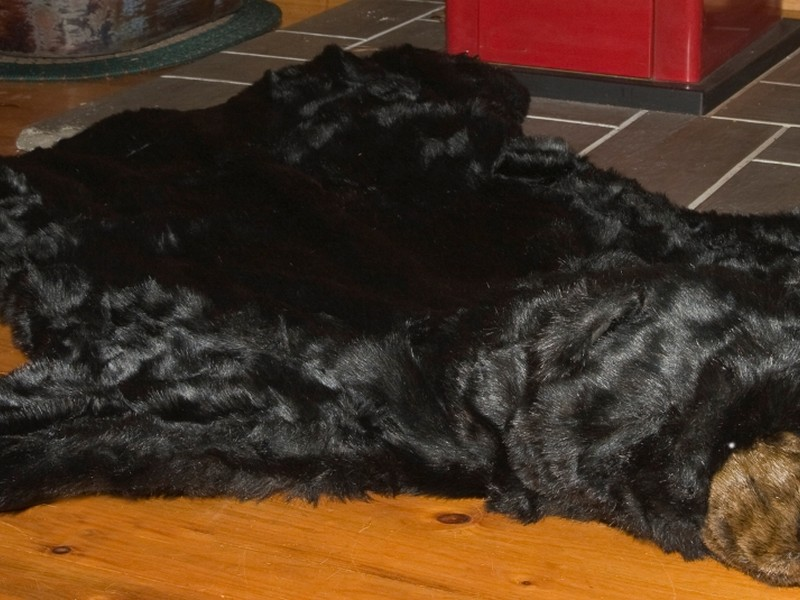Faux Animal Rugs With Head