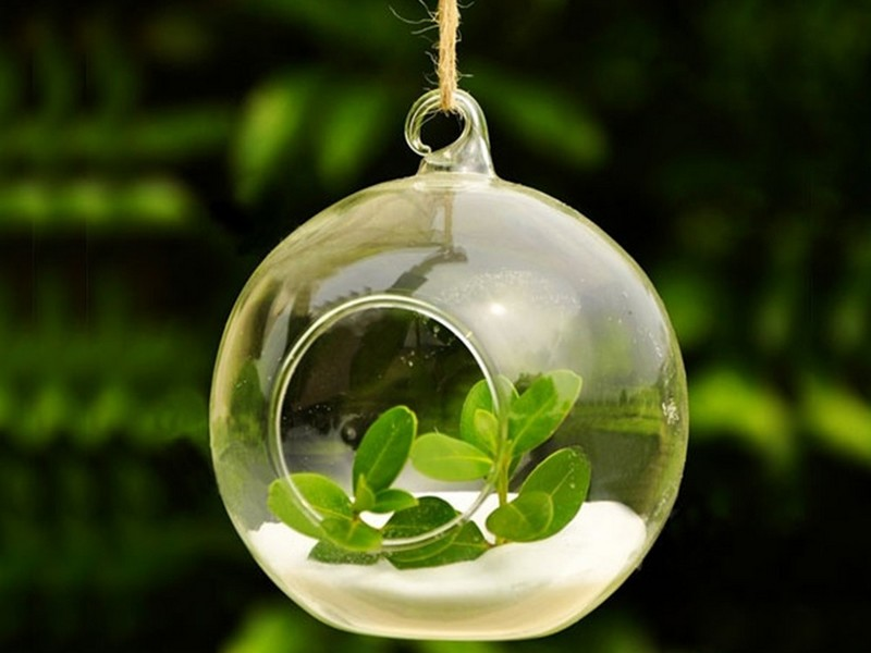 Hanging Glass Bubble Planters