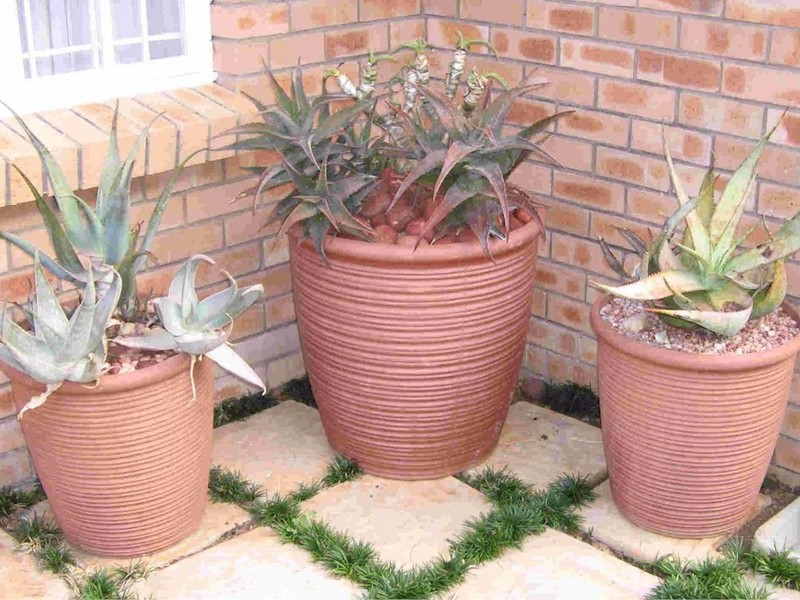 House Plant Pots Containers