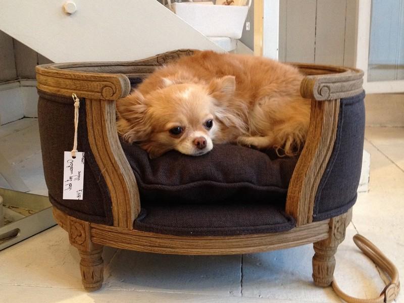 Luxury Cat Beds