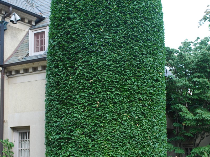 Outdoor Topiary Trees