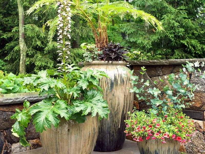 Patio Planter Ideas
