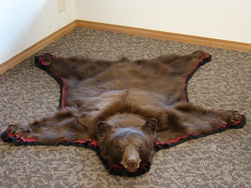 Real Bear Skin Rug
