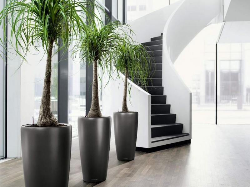 Tall Plant Pots For Indoor Plants