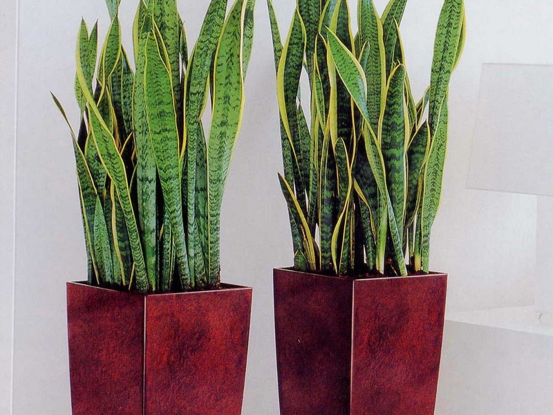 Tall Plant Pots Uk