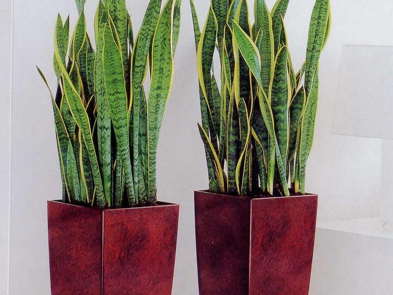 Tall Plant Pots Uk